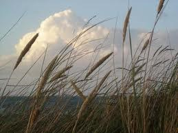 Ngọn gió đưa ta tiến tới