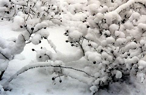 Sáng mùa đông