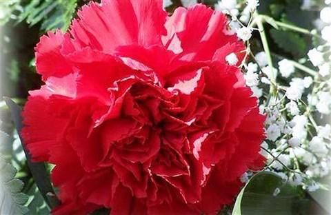 Tháng sinh của bạn tương ứng với loài hoa nào?