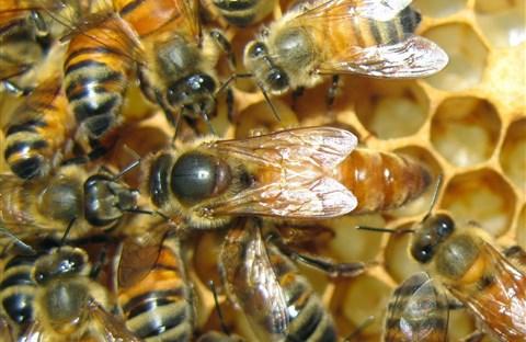 Những điều lý thú về Ong