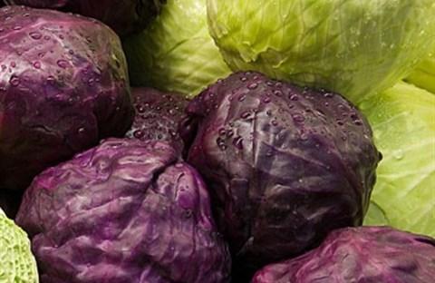Bắp cải - Loại rau nhiều dinh dưỡng nhất mùa đông