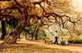 Hà Nội mùa thu