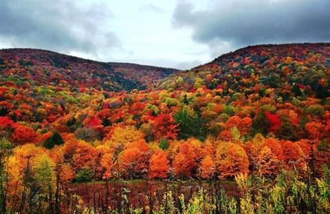 Ngắm rừng thu tuyệt đẹp trải khắp nước Mỹ