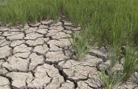 Biến đổi khí hậu và con người