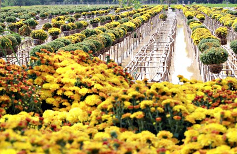 Những làng hoa nổi tiếng miền Nam