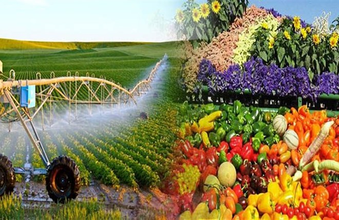 6 cách người Israel áp dụng vào sa mạc khô cằn, làm thay đổi nền nông nghiệp thế giới