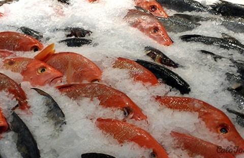 Những lưu ý khi ăn, cất trữ, chế biến cá