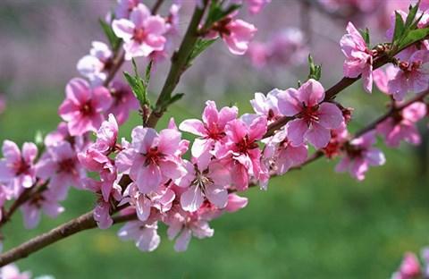 Xuân ấm hương rừng