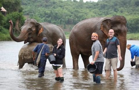 Lào, nước mệnh danh triệu voi, giờ còn  chưa tới 1000 con