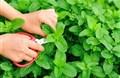 Ích lợi của rau xanh với sức khỏe