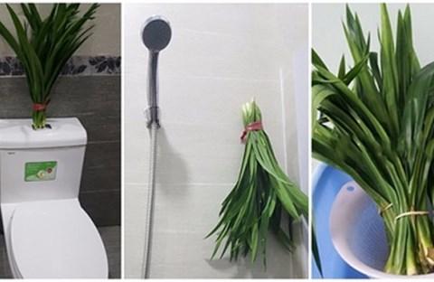 Mẹo khử mùi hôi hiệu quả trong WC