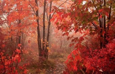 Bí ẩn lá đổi màu vào Mùa Thu