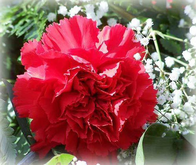 Tháng sinh của bạn tương ứng với loài hoa nào? - 1