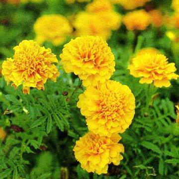 Tháng sinh của bạn tương ứng với loài hoa nào? - 10