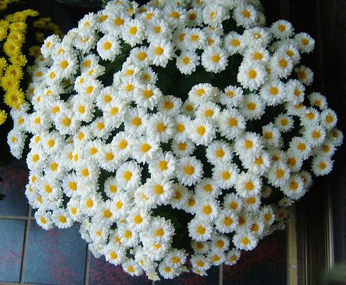 Tháng sinh của bạn tương ứng với loài hoa nào? - 11