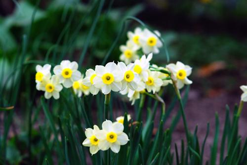 Tháng sinh của bạn tương ứng với loài hoa nào? - 12