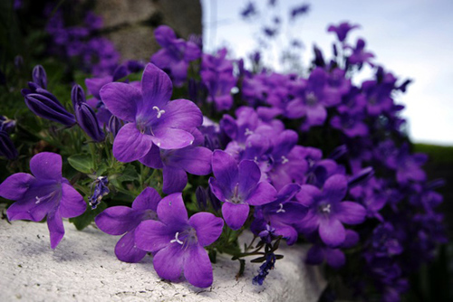 Tháng sinh của bạn tương ứng với loài hoa nào? - 2