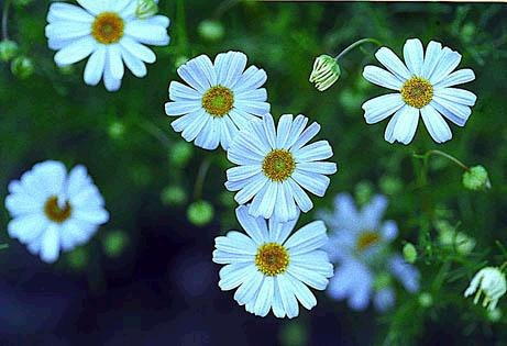 Tháng sinh của bạn tương ứng với loài hoa nào? - 4