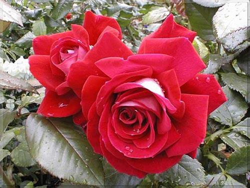Tháng sinh của bạn tương ứng với loài hoa nào? - 6