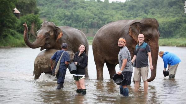 Lào, nước mệnh danh triệu voi, giờ còn  chưa tới 1000 con - 1