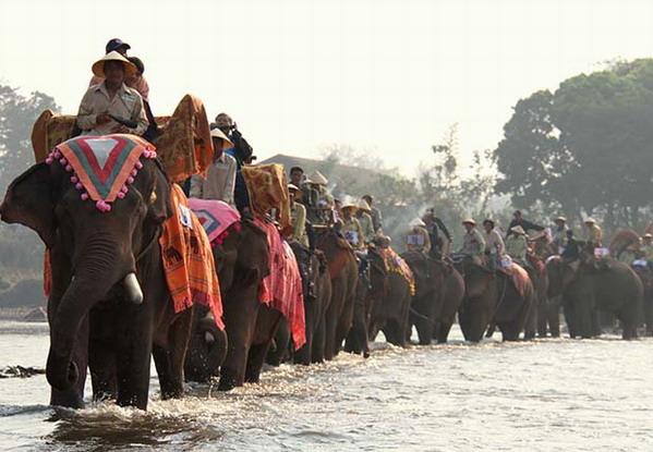 Lào, nước mệnh danh triệu voi, giờ còn  chưa tới 1000 con - 2