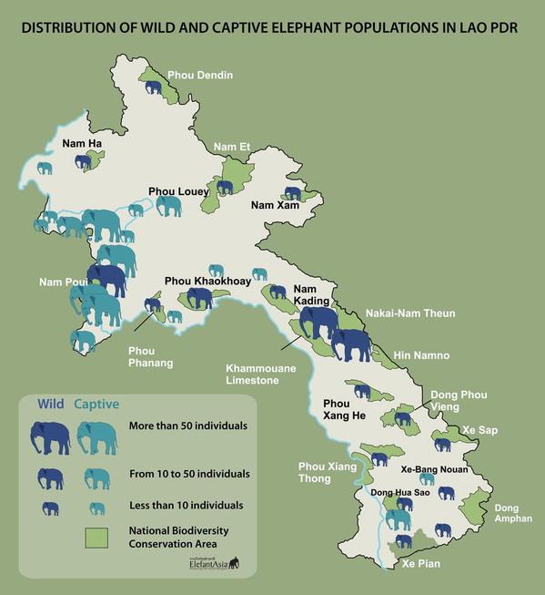 Lào, nước mệnh danh triệu voi, giờ còn  chưa tới 1000 con - 3