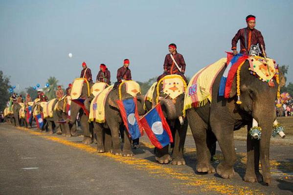Lào, nước mệnh danh triệu voi, giờ còn  chưa tới 1000 con - 4