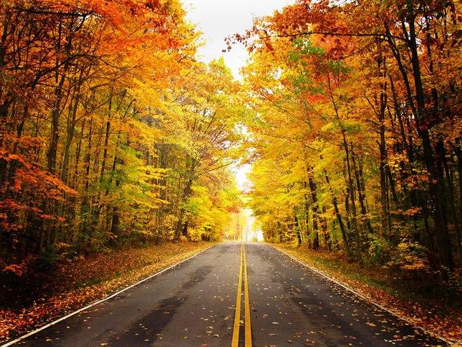 Ngắm rừng lá thu vàng tuyệt đẹp trải khắp nước Mỹ