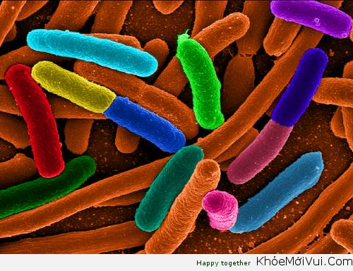 Sự Khác Biệt Giữa Virus Và Vi Khuẩn, Sự Lây Lan Và Cách Phòng Ngừa - 1