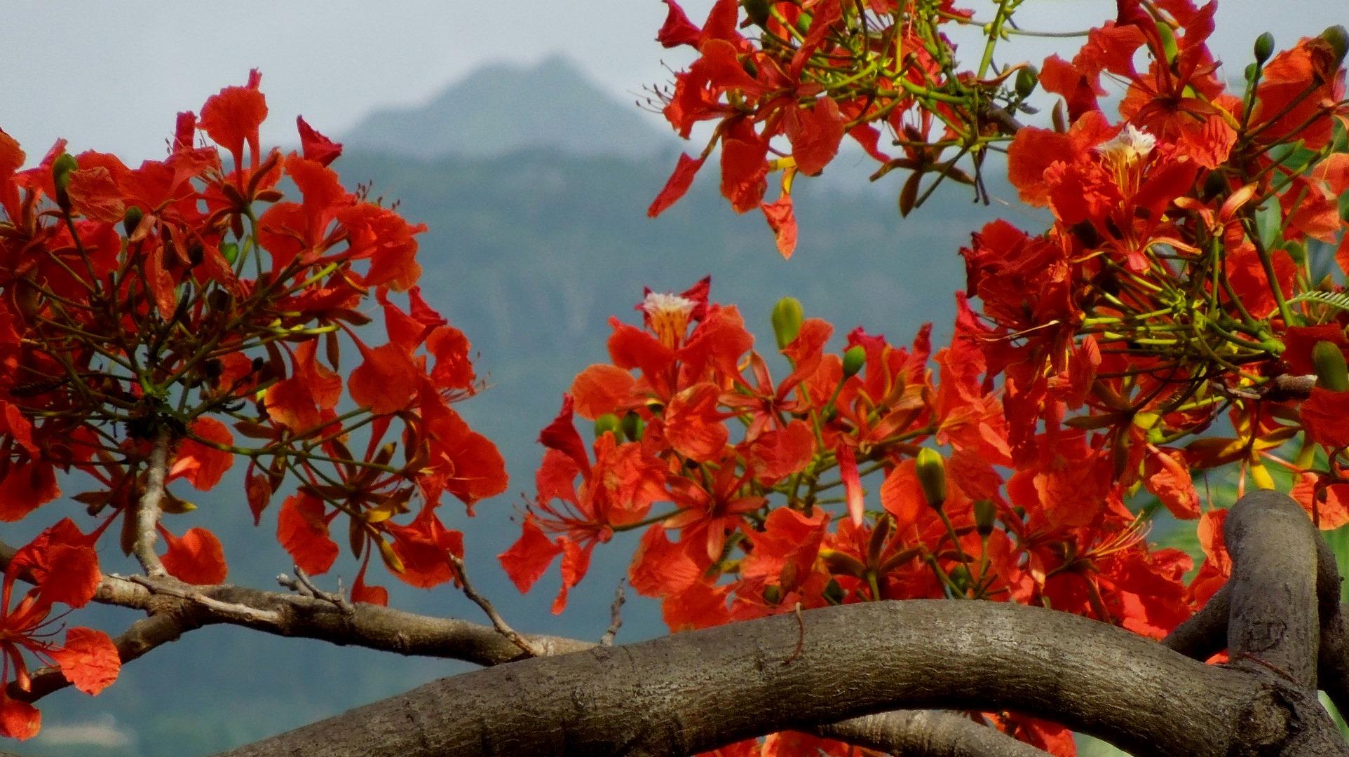 Mùa hè ở Tahiti - 1
