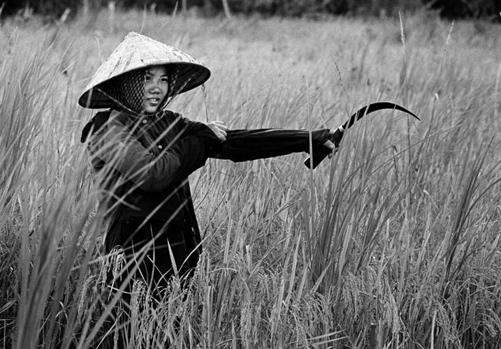 Phụ nữ trong chiến tranh Việt Nam - 3