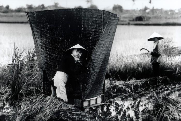 Phụ nữ trong chiến tranh Việt Nam - 2