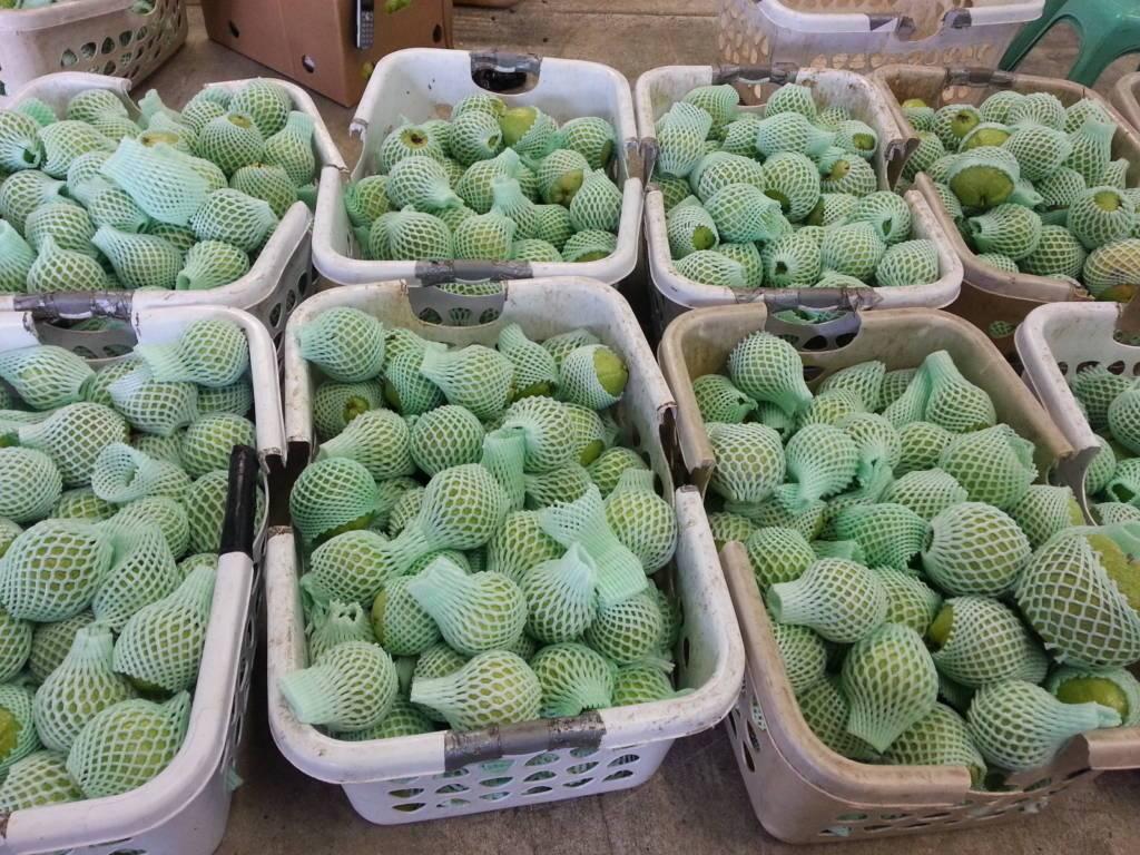 Nông dân Việt làm giàu bằng trái cây Việt tại Mỹ - 6