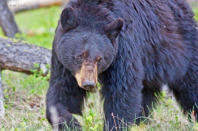 Vườn quốc gia Yellowstone - Hợp chủng quốc Hoa Kỳ - 13