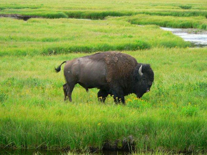 Vườn quốc gia Yellowstone - Hợp chủng quốc Hoa Kỳ - 3