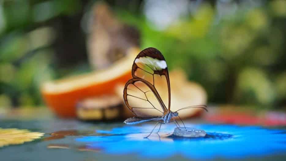 Hình ảnh tuyệt đẹp của cuộc sống hoang dã - 41