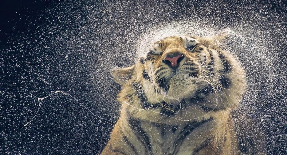 Hình ảnh tuyệt đẹp của cuộc sống hoang dã - 25