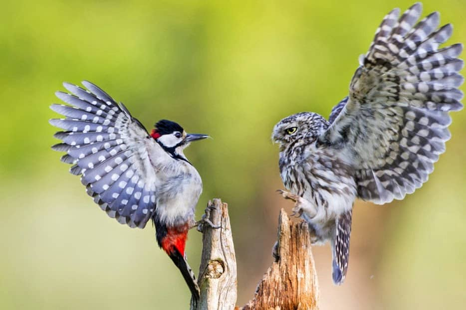 Hình ảnh tuyệt đẹp của cuộc sống hoang dã - 15