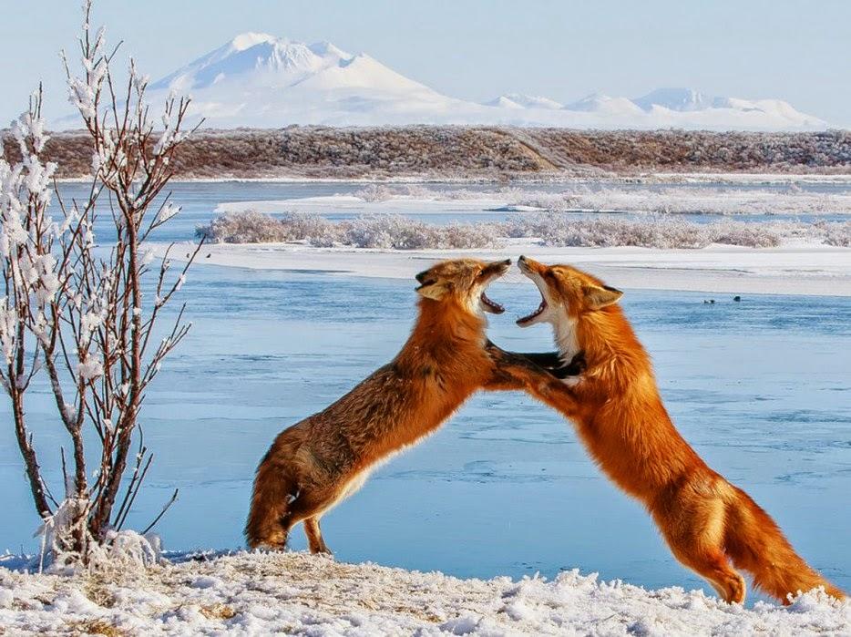 Hình ảnh tuyệt đẹp của cuộc sống hoang dã - 29