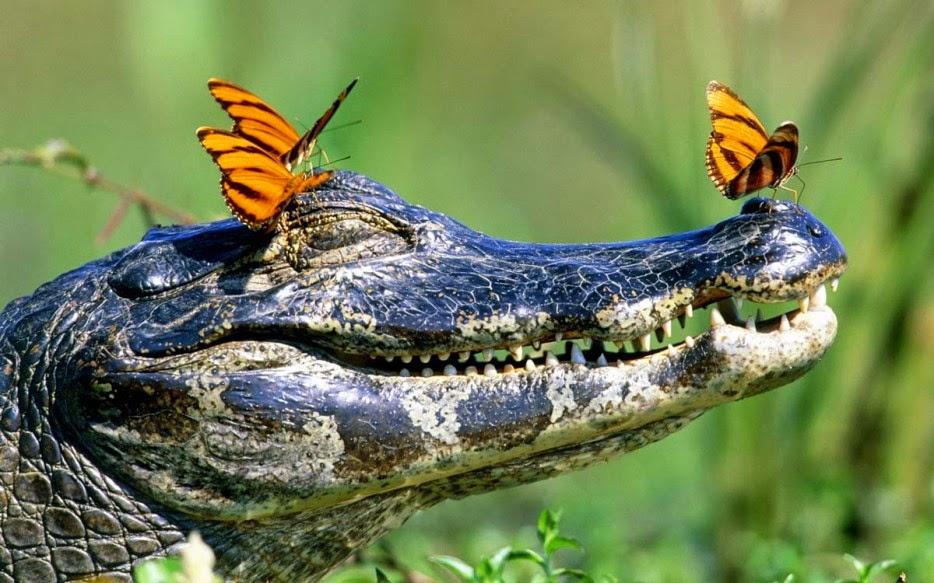 Hình ảnh tuyệt đẹp của cuộc sống hoang dã - 17