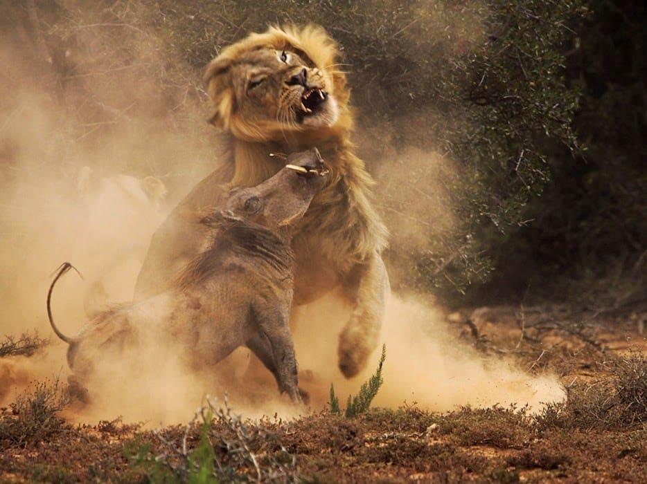 Hình ảnh tuyệt đẹp của cuộc sống hoang dã - 35