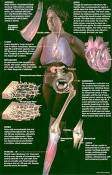 Khi nào các bộ phận trong cơ thể con người bắt đầu thoái hóa? - 2