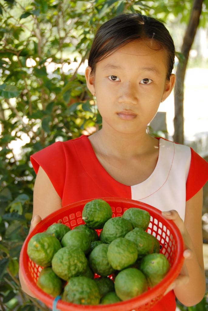 Cây Chúc (Chanh Thái Lan) - 9