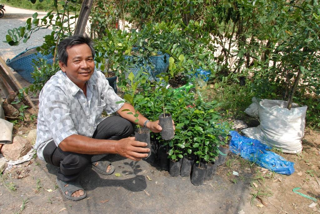 Cây Chúc (Chanh Thái Lan) - 12