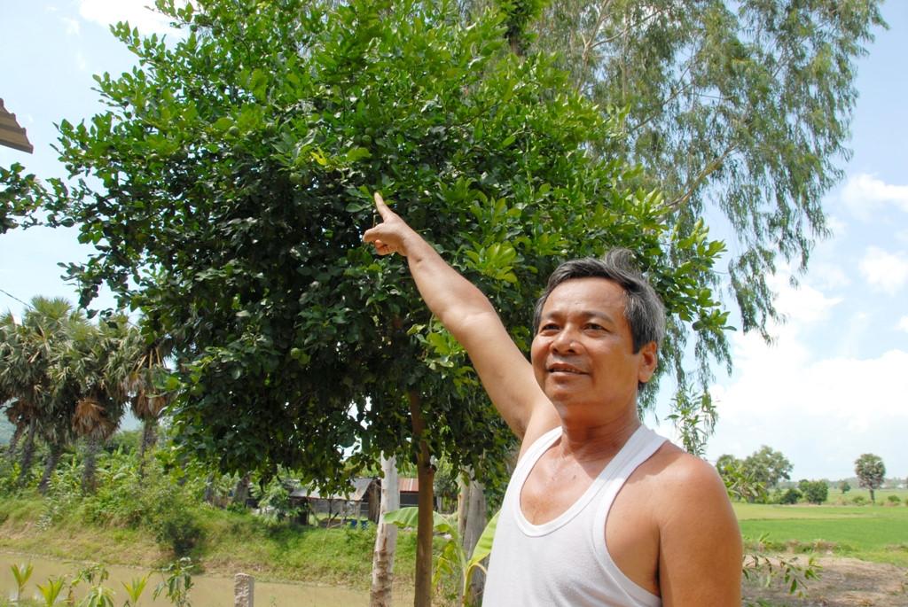 Cây Chúc (Chanh Thái Lan) - 2