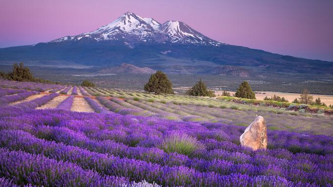 Thiên đường oải hương tràn sắc tím giữa lòng Provence - 5