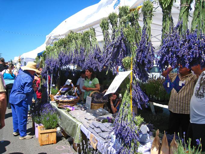 Thiên đường oải hương tràn sắc tím giữa lòng Provence - 3