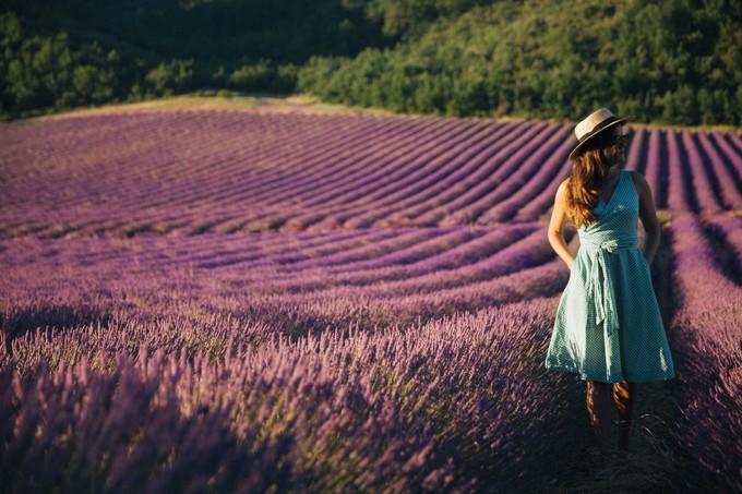 Thiên đường oải hương tràn sắc tím giữa lòng Provence - 2