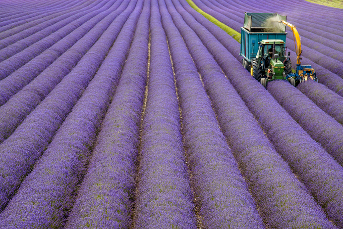 Thiên đường oải hương tràn sắc tím giữa lòng Provence - 7