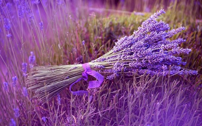 Thiên đường oải hương tràn sắc tím giữa lòng Provence - 8